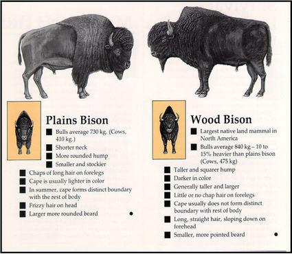 bison-comparison-chart