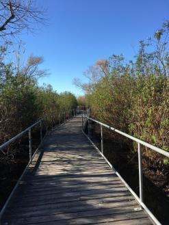 a boardwalk through a brushy and wetland area