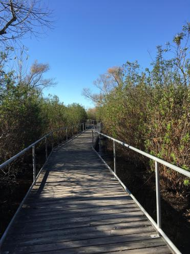 a boardwalk through a brushy and wetland area