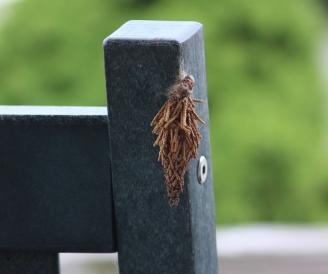 mothemerging