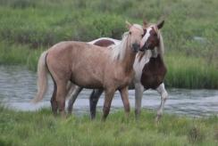 ponies3