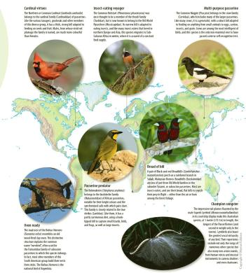 atlasofbirds passerines