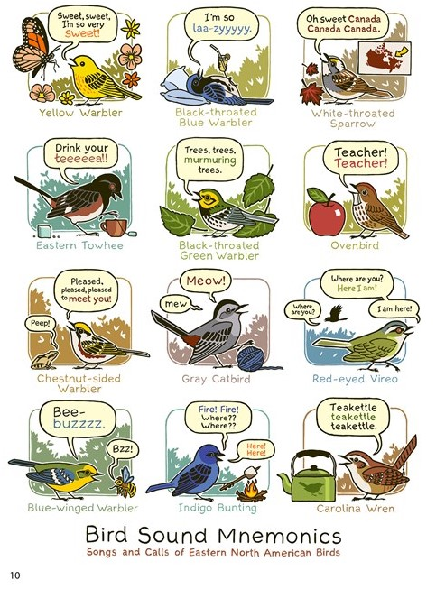 bird video page 10