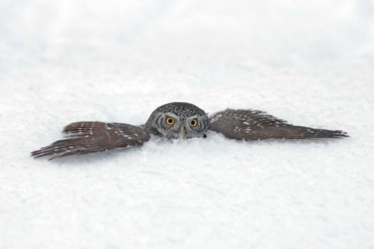 Owl pg 139