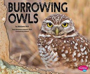 BurrowingOwlbyHill01
