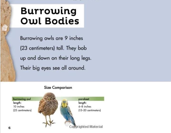 BurrowingOwlbyHill02