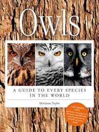 owls every species taylor