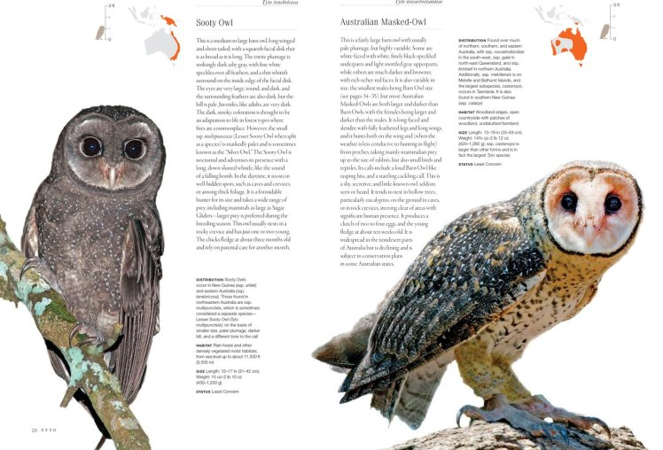 owls every species taylor2