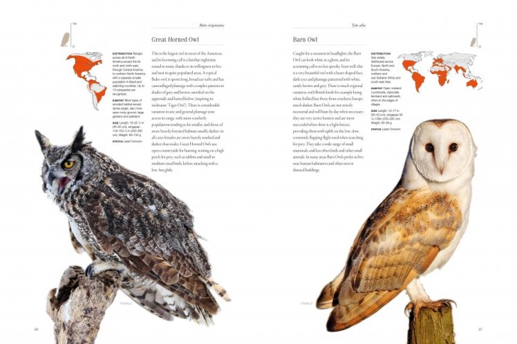 owls every species taylor3