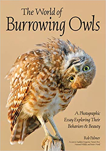 palmer burrowing owls