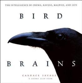 birdbrains1