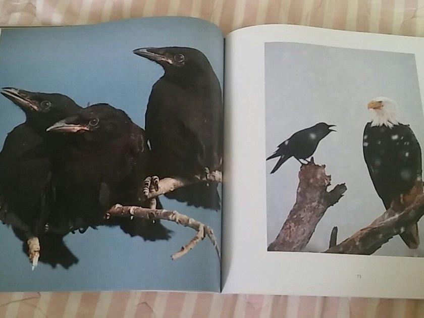 birdbrains2