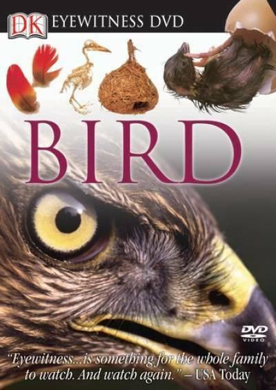 eyewitnessbird1